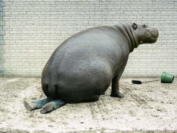 Don't_make_hippopotamus_angry
